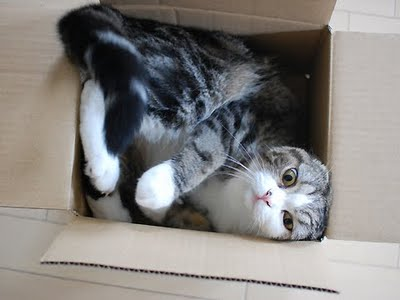 Before Maru, boxes were just empty cardboard vessels